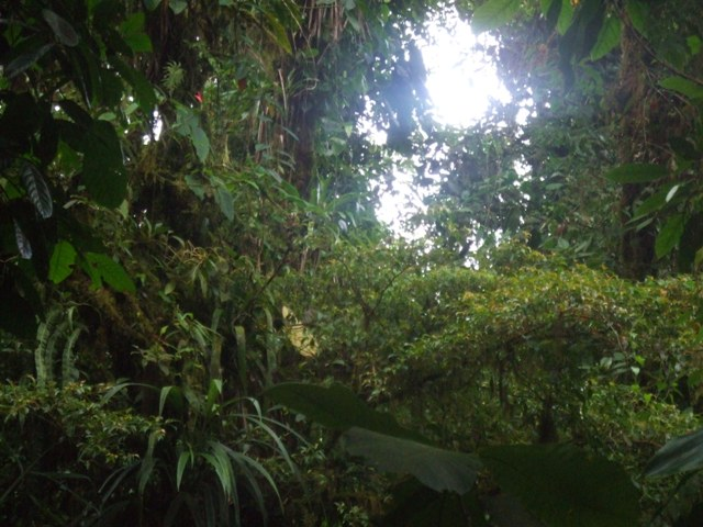 Cloud Forest, Salvatura, Guanacaste