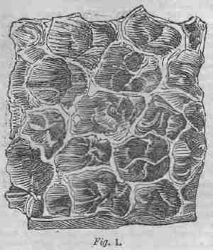 Tripe, figure 1
