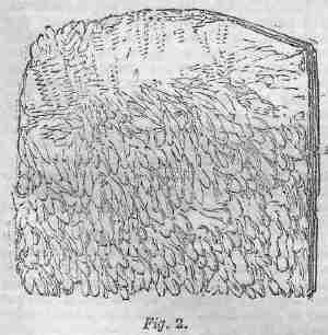 Tripe, figure 2